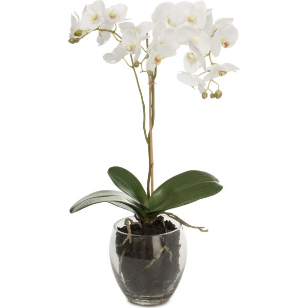 Orkide i glasskål hvid. H 65 cm